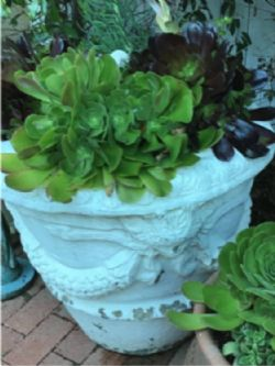 One of a Kind Succulent Planter